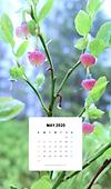 ◆北欧生活◆カレンダー2020年5月(モバイル用).png