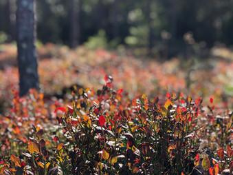 心満たされる秋の森散策
