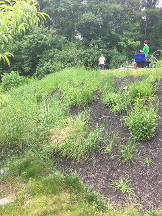 Hill of weeds and debris