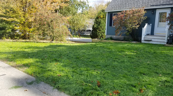 New lawn 1 month later
