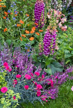 Mixed-Perennials-Garden-JWW2766