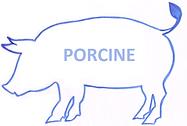 PORCINE.png