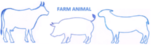 FARM ANIMAL.png