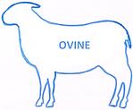 OVINE.png