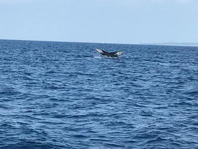 季節限定:冬天出海賞鯨釣魚 與孩子體驗沖繩海釣樂