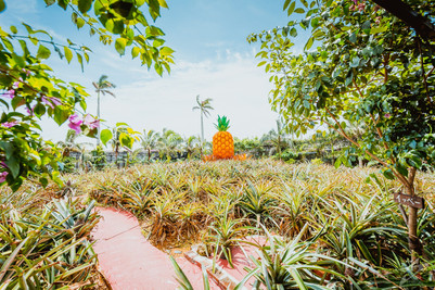 沖繩景點:北部名護 鳳梨公園 適合親子旅遊