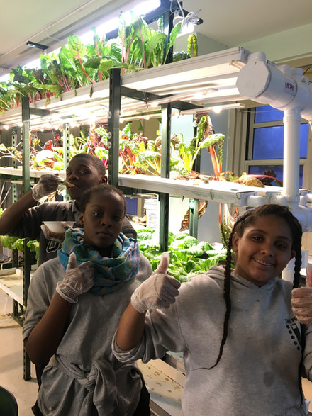 A view of our hydroponic farm