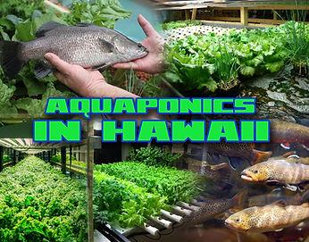 Aquaponics in Hawaii