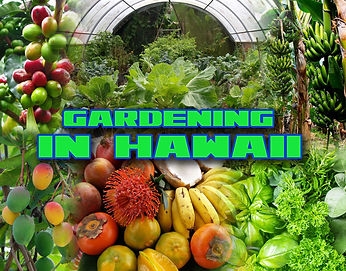 Gardening in Hawaii