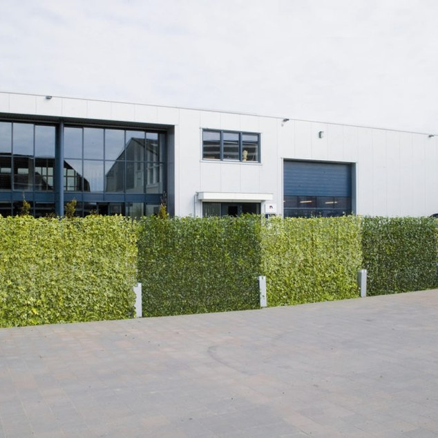 Instant Hedera Ivy Screening Fence
