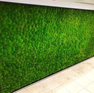 Bun Moss Wall