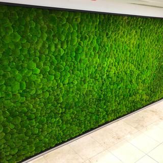 Moss Walls UK