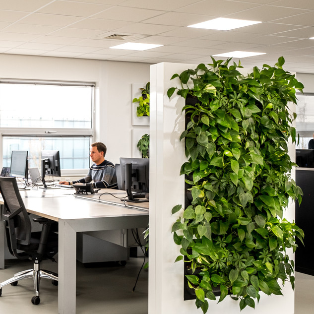 Live Divider Screen Freestanding Office Plant Wall Screen