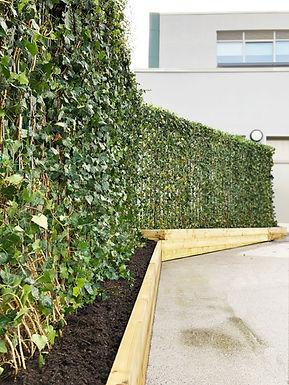 Green Screens Pikefold School Playground Hedera Helix.jpg