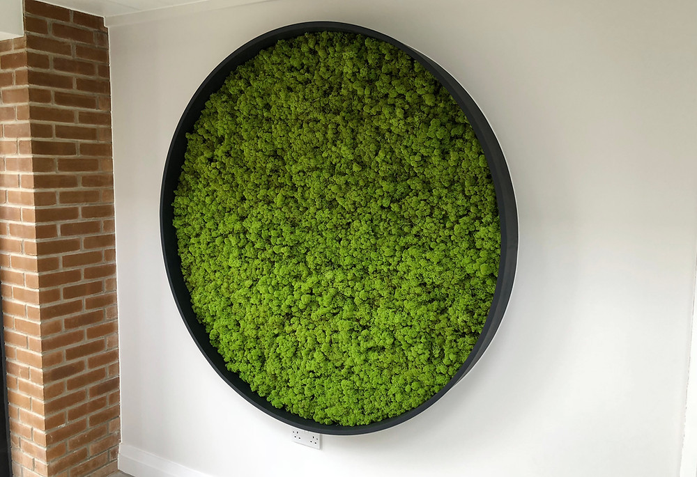 Circular round reindeer moss wall frame. Biophilic interiors.