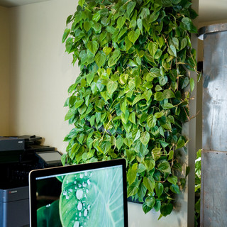 Live Panel Pack Manual Watering Easy Living Wall