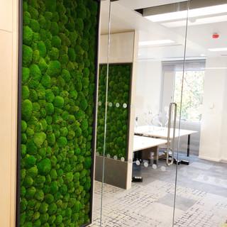 Bun Moss Wall Frames For BBC