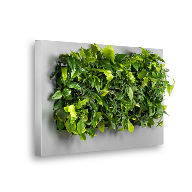 Live Picture 3 Office Wall Planters in S