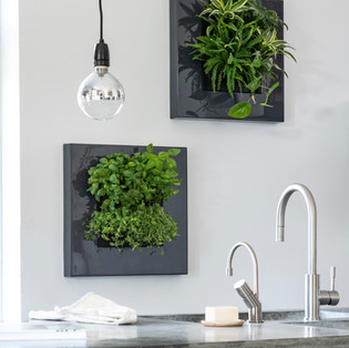 Live Picture Go - Small Plant Wall Frames