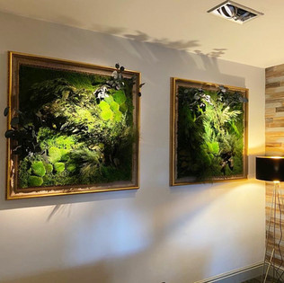 Moss Wall Panels in Gilded Frames