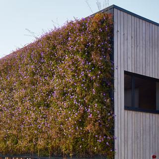 LivePanel Outdoor Living Walls.jpg