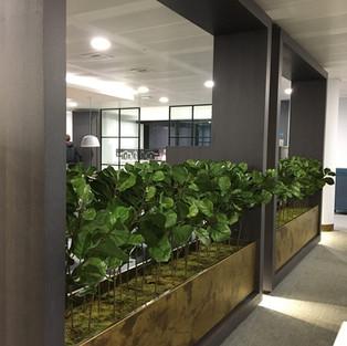 Artificial Office Plants.jpg