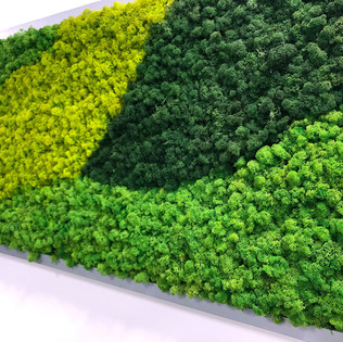 Office Moss Wall Frames With Preserved R