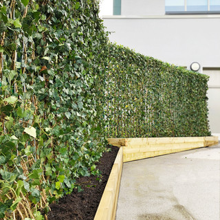 Pollution reducing hedera ivy Green Screens