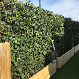 Urban Greening For Inner City Schools