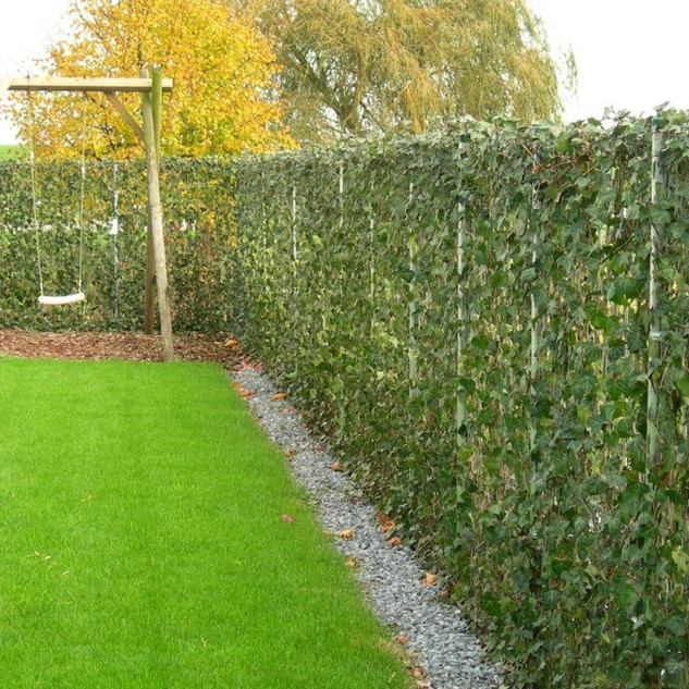Instant Ivy Screen Fence For Urban Greening