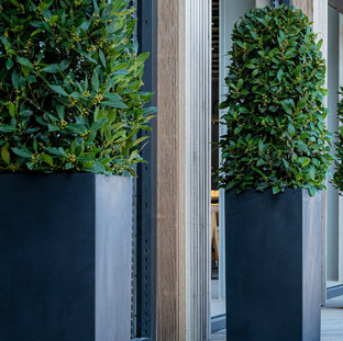 Tall Black Planters with Bay Trees
