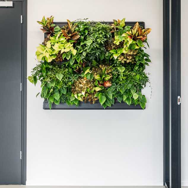LivePanel Pack manual watering green wall system