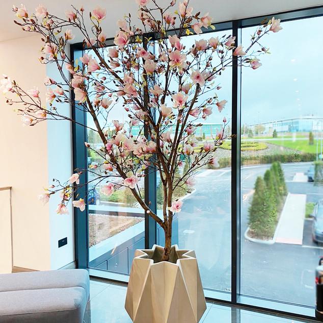 Magnolia Tree In Concrete Geometric Plan