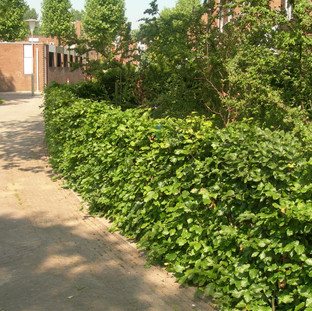 Instant Hedges for Commercial Exteriors and Public Spaces