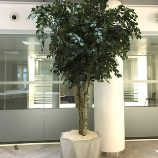 3m Tall Artificial Tree In Concrete Plan