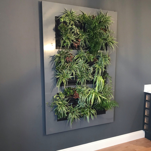 Live Picture Plant Wall Frame