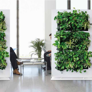 Live Divider Plant Screen Free Standing