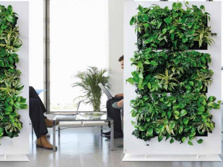 Incorporating Biophilic Elements For Workplace Social Distancing