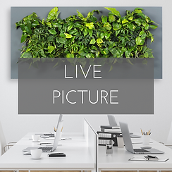 GREEN WALLS (6).png