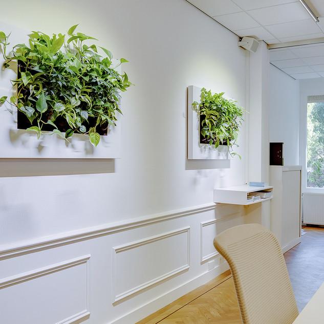 Mobilane LivePicture Office Plants