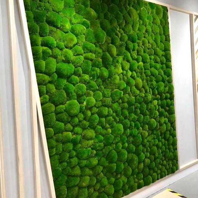 Bun Moss Wall at RBS London Head Office