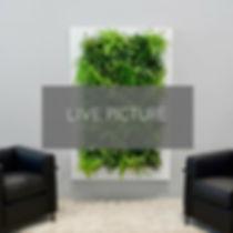 GREEN WALLS (17).jpg