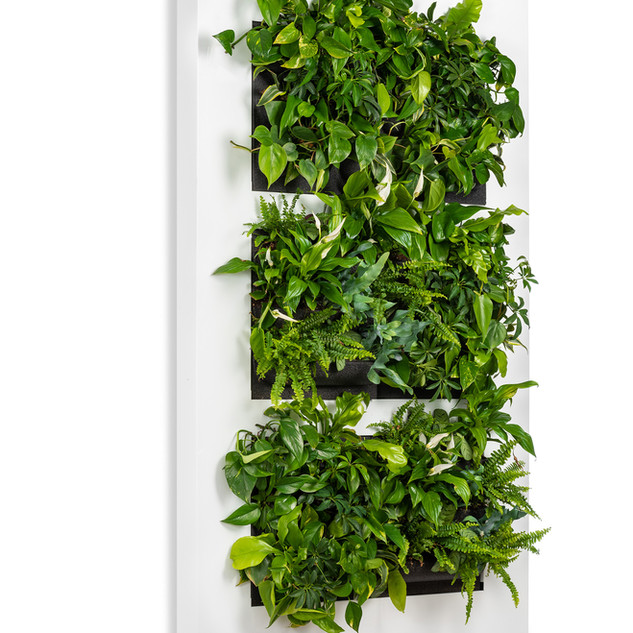 Live picture XL Large Green Wall Plant Frame White