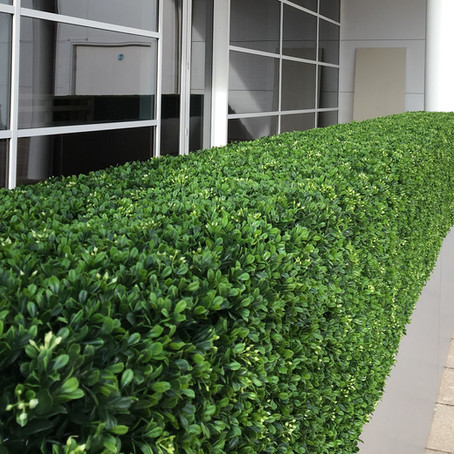 Artificial Boxwood Hedges for Boundary Mill Stores