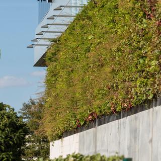 Live Panel Outdoor Living Wall.jpg