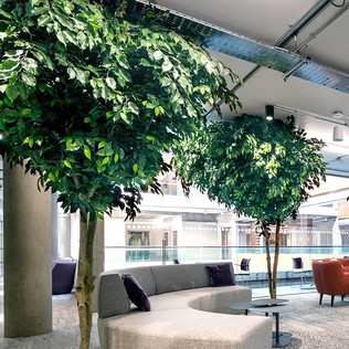 Large Artificial Trees for Thames Valley