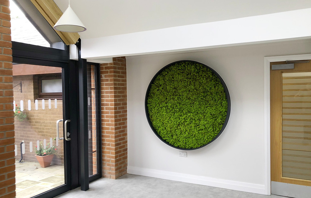 Natural biophilic reindeer moss wall in circular frame
