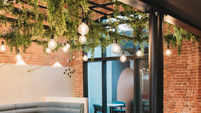 Restaurant Project - Zero Maintenance Trailing Plants