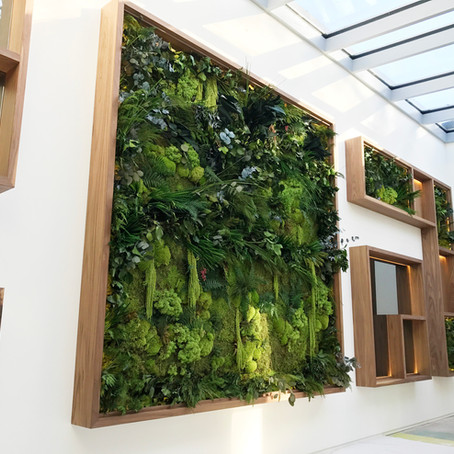 Biophilic Preserved Plant Wall Design