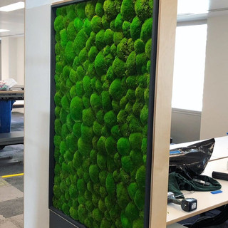 Moss Wall Frames for BBC London